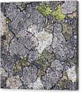 Mossy Mouldy Rock Texture Canvas Print