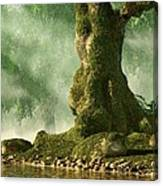 Mossy Old Oak Canvas Print