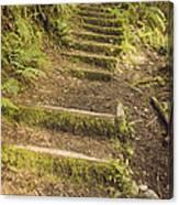 Mossy Path Canvas Print
