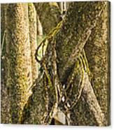 Mossy Pier Canvas Print