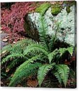 Mossy Rock And Fern Canvas Print