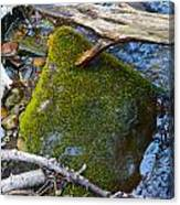 Mossy Rock Canvas Print