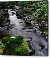 Mossy Rock Streamside Canvas Print