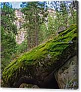 Mossy Rocks Along Vernal Falls Trail Canvas Print