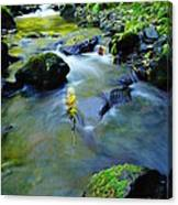 Mossy Rocks And Moving Water  Canvas Print