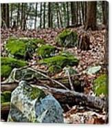 Mossy Rocks Canvas Print