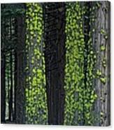 Mossy Sentinels Canvas Print