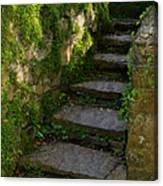 Mossy Steps Canvas Print