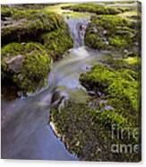 Mossy Stream Canvas Print