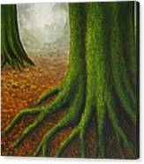 Mossy Trees Canvas Print