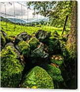Mossy Wall Canvas Print