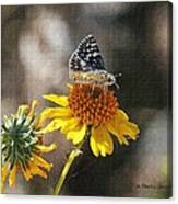 Moth And Flower Canvas Print
