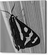 Moth Bw Macro Canvas Print