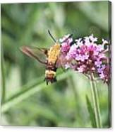 Moth On Flowers Canvas Print