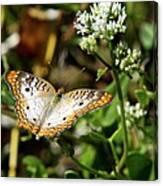 Moth On White Flower Canvas Print