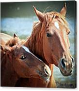Mother And Filly Canvas Print