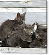 Cat And Kittens Canvas Print