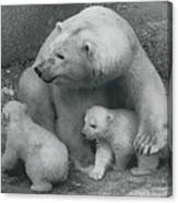 Mother Bear Shows Off Her Twin Babies. Tiyak And Tineak - Canvas Print