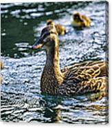 Mother Duck Canvas Print