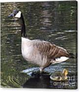 Mother Goose Is Watching Canvas Print