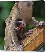 Mother Monkey And Her Baby Canvas Print