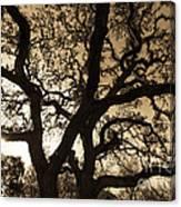 Mother Nature's Design Canvas Print
