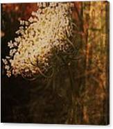Mother Nature's Lace Canvas Print