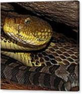 Mother Snake Canvas Print