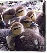 Mother's Brood Canvas Print