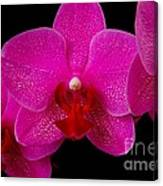 Mottled Orchid 8 Canvas Print