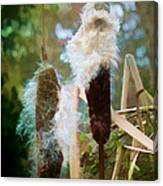Moulting Canvas Print