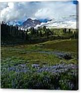 Mount Baker Lupine Meadows Canvas Print