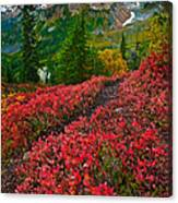 Mount Baker Sunrise Canvas Print