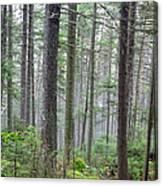 Mount Jim - Kinsman Notch New Hampshire Canvas Print