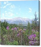 Mount Katahdin And Wild Flowers Canvas Print