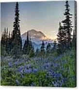 Mount Rainer Flower Fields Canvas Print