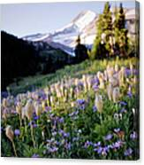 Mountain And Meadow Of Wildflowers Canvas Print Canvas Art By Danielle D Hughson