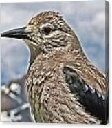 Mountain Bird Canvas Print