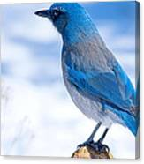 Mountain Blue Bird Canvas Print