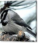 Mountain Chickadee During A Light Snow Canvas Print