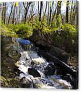 Mountain Creek In Spring Canvas Print