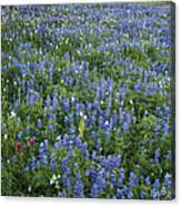 Mountain Flower Meadow Canvas Print