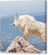 Mountain Goat Up High Canvas Print