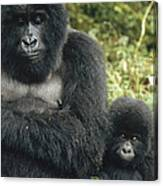 Mountain Gorilla Mother And Baby Canvas Print