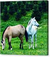 Mountain Horses Grazing  Canvas Print