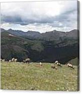 Mountain Landscape With Bighorn Sheep Canvas Print