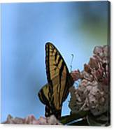 Mountain Larual Butterfly Canvas Print
