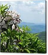 Mountain Laurel Canvas Print