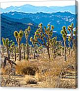Mountain Layer Landscape From Quail Springs In Joshua Tree Np-ca- Canvas Print