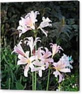 Mountain Lillies Canvas Print